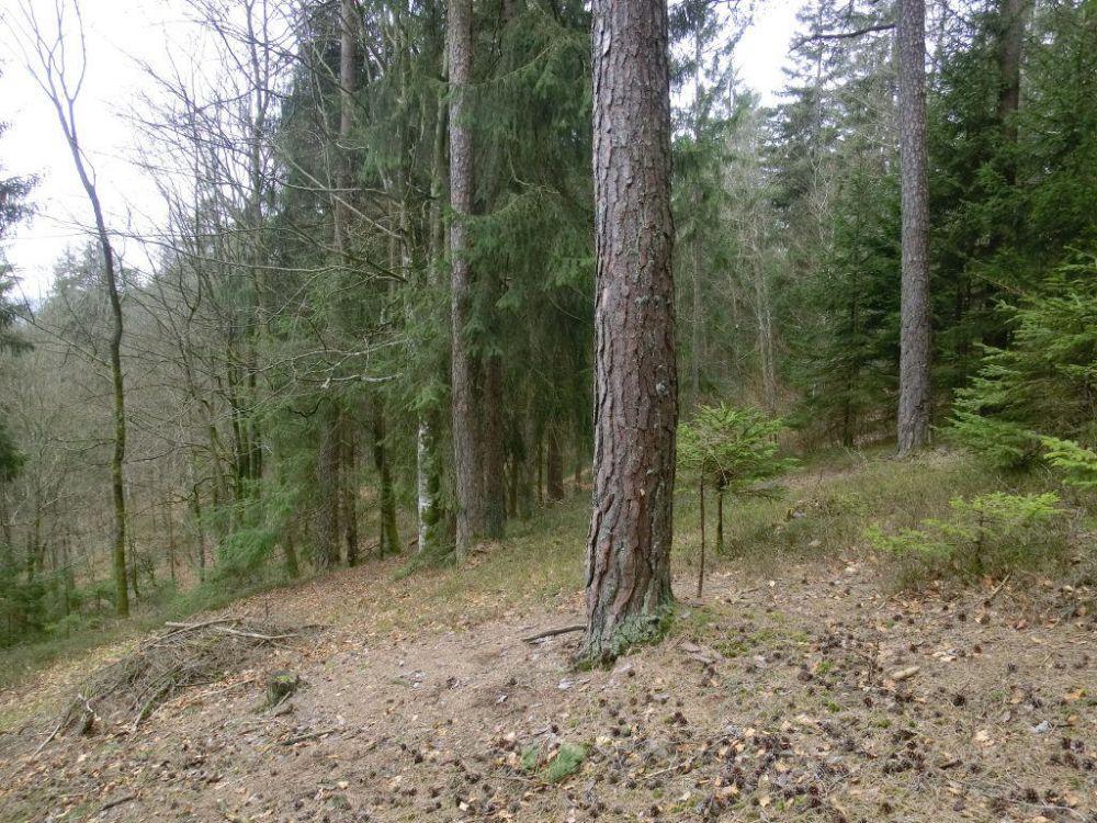 Waldgrundstück vr wohnen de waldgrundstück das immobilienportal für wohnungen